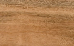 image of spotted gum